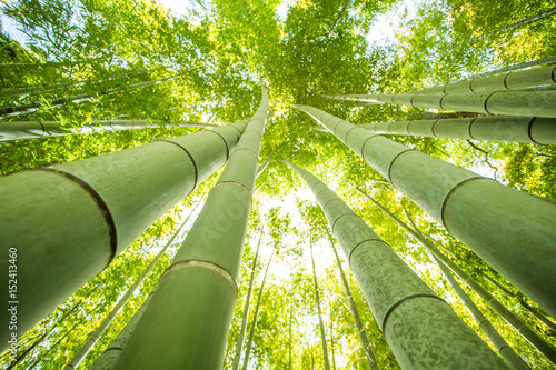 bamboo forest - 152413460