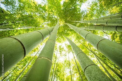 Fotografía  bamboo forest