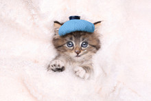 Sick Kitten With Ice Bag And Thermometer