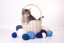 Cute Kitten In A Basket With Yarn On White