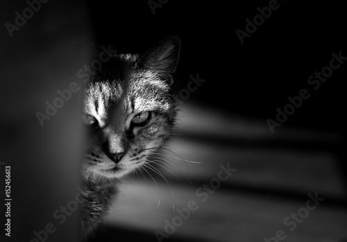 Tiger cat hiding and staring in a menacing way Canvas Print
