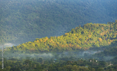 Foto op Aluminium Nachtblauw the tropical forest layers, Thailand