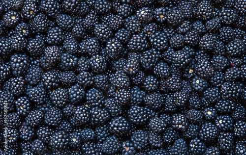 Background from fresh Blackberries Canvas Print