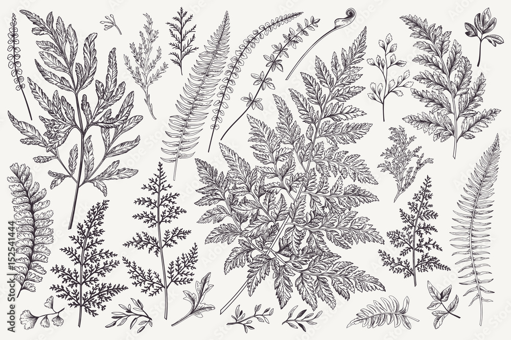 Fototapety, obrazy: Set of fern leaves.