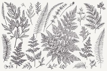 Panel Szklany Podświetlane Do przedpokoju Set of fern leaves.