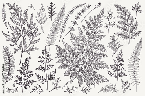 Foto  Set of fern leaves.