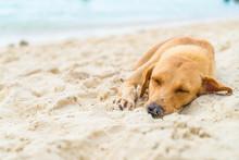 Dog Sleep On Beach