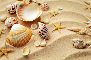 Obraz seashells and sand