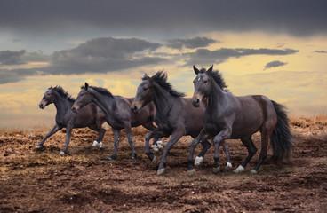 A few dark horsehorses gallop across the steppe