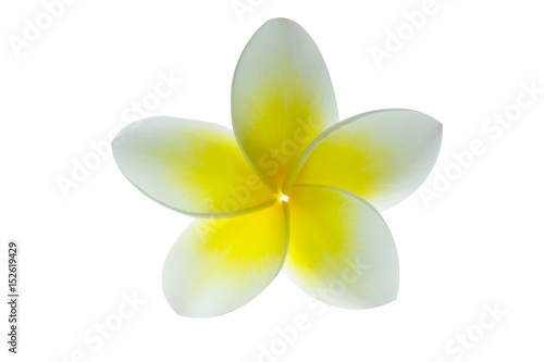 Foto op Canvas Frangipani Frangipani flower or plumeria isolated on white . Clipping path.