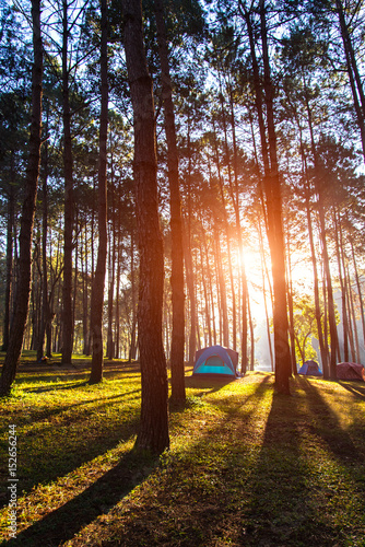 Photo sur Toile Cimetiere Camping and tent under the pine forest in sunset at Pang-ung, pine forest park , Mae Hong Son, North of Thailand.