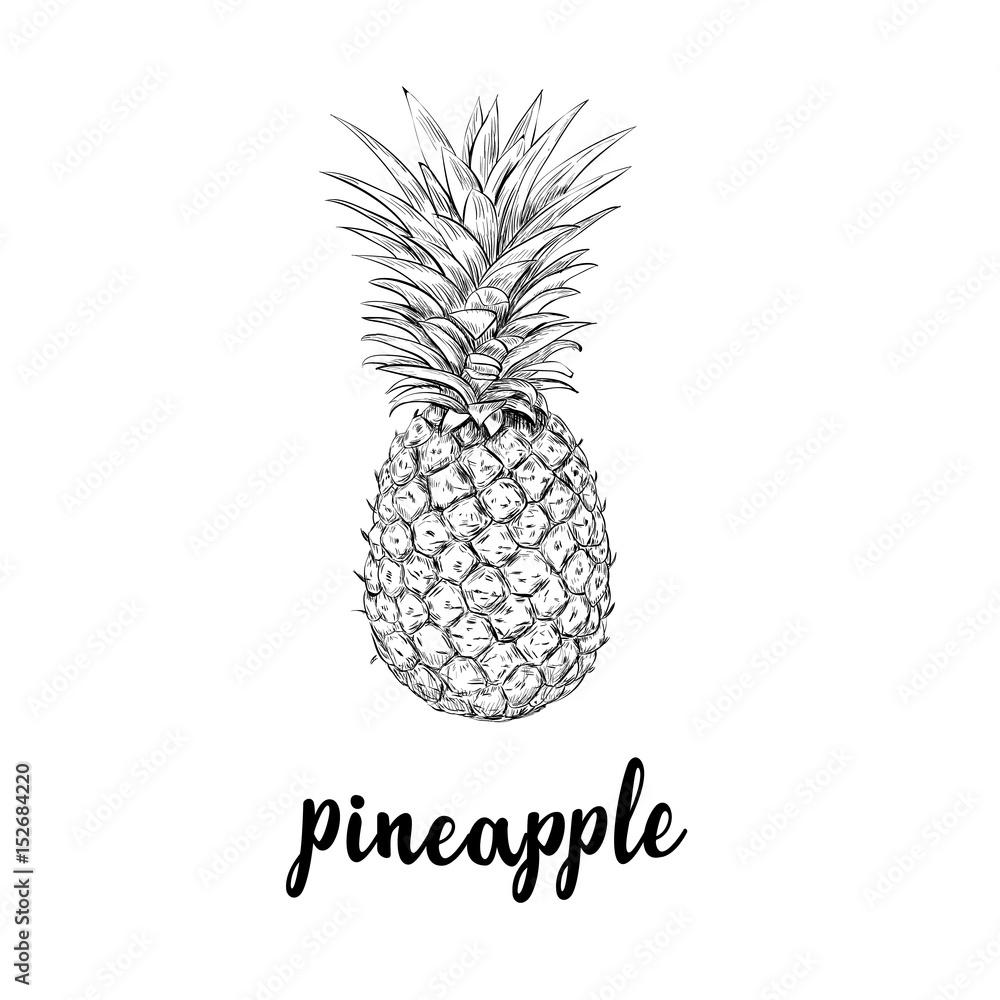 Ananas Rysunek fotografia pineapple sketch is a vintage drawing - kup na