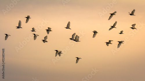 A flock of seagulls in the sky at sunset Fotobehang