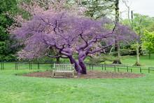 Purple Violet Painted Tree Detail