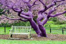 Purple Violet Painted Tree Detail