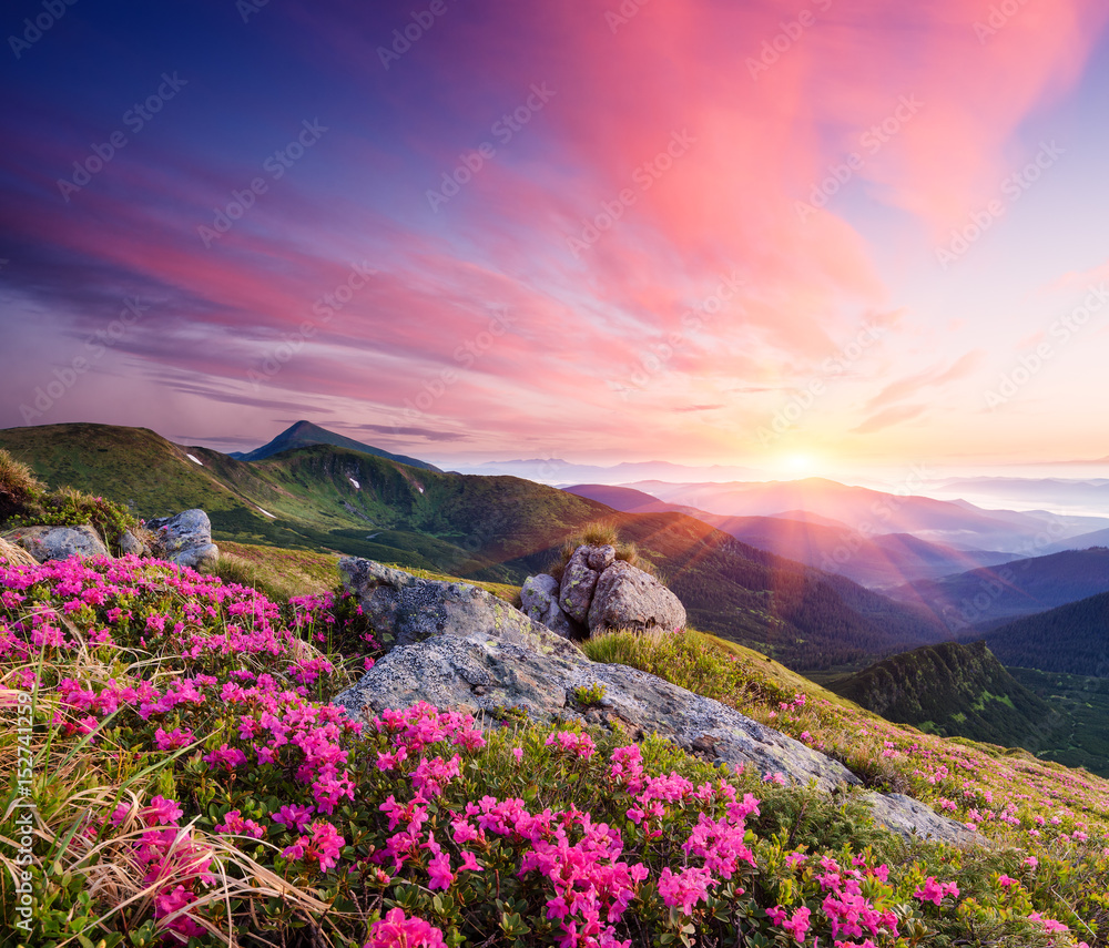 Fototapety, obrazy: Summer landscape with flowers in the mountains