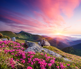 Fototapeta Summer landscape with flowers in the mountains