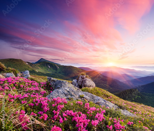 Keuken foto achterwand Landschappen Summer landscape with flowers in the mountains