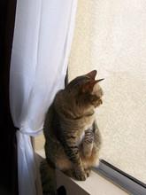 Pondering Cat In Window