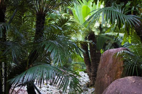 Photo  シンガポール植物園
