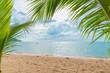 palm with empty beach