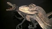 Dinosaur Exhibition At Sydney ...