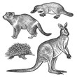Animals of Australia. Tasmanian devil, Platypus, Wallaby or kangaroo, Echidna.