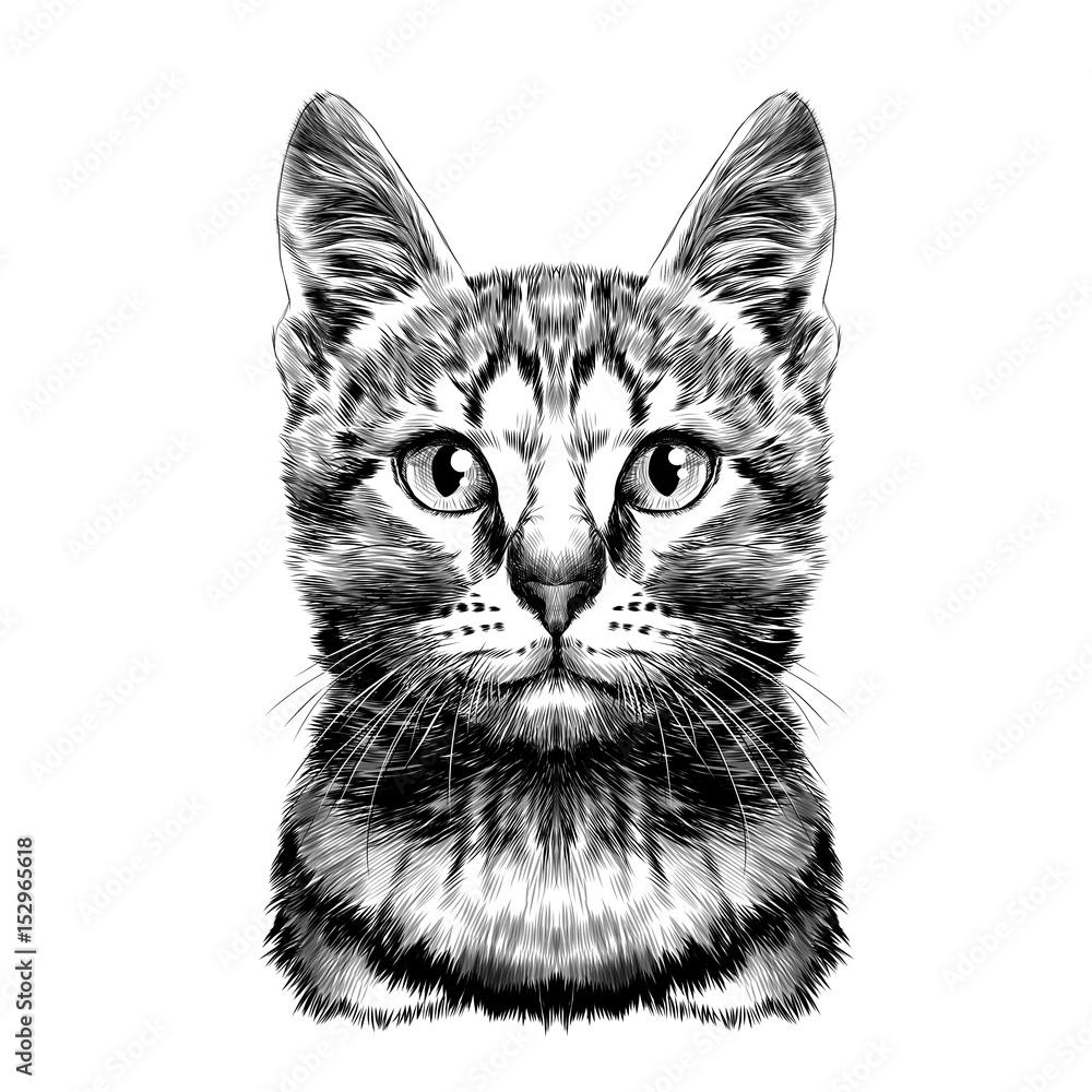 kot zauważył paski głowy symetryczne szkic wektor grafika czarno-biały rysunek