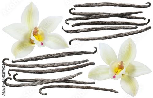 Vanilla bean element set isolated on white background