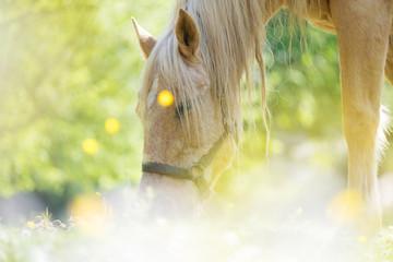 cheval pré été lumière reflet manger herbe fleur brouter passion écurie