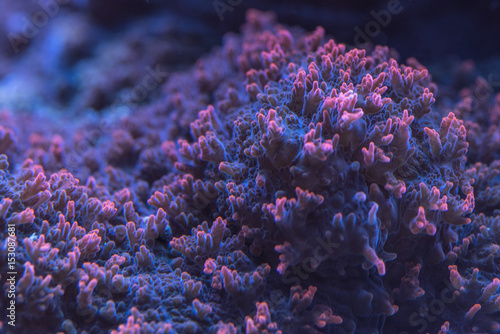 Closeup image of soft coral colony tentacles