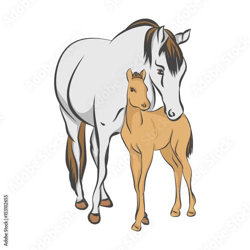 Obraz na płótnie The grey horse and her foal