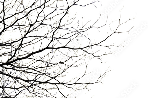 Fotografie, Tablou tree branch silhouette photography , white background