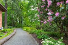 Rhodoendron Flowers In Bloom Along Garden Path