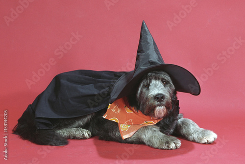 Fotografie, Obraz  Harry Potter Halloween Dog