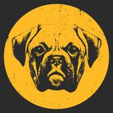 Portret boksera psa. Ilustracja rysowane ręcznie. Projekt koszulki. Wektor - 153150494