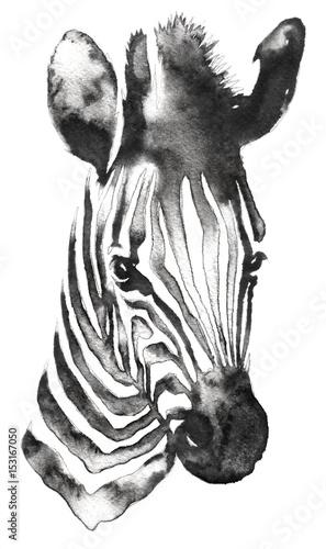 czarno-bialy-monochromatyczny-obraz-z-woda-i-atramentem-rysuje-zebre