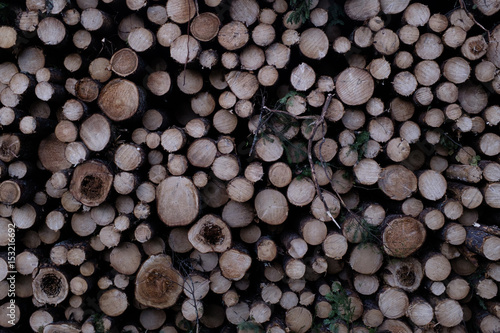 Clearcut Log Pattern  - 153216692