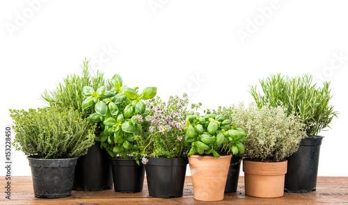Fresh herbs Basil rosemary thyme savory white background