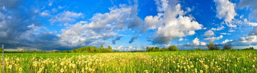 Fototapety, obrazy: Spring meadow panorama, full of dandelions