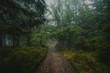 Hiking trail through a mystic forest