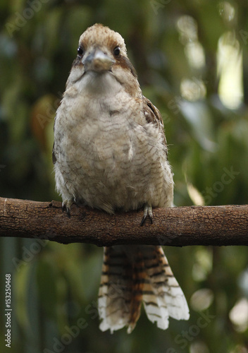 To Match Reuters Life Bird Obese Buy This Stock Photo And Explore