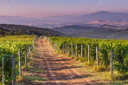 Papiers peints Vignoble Dirt road through Chianti Vineyard
