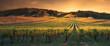 canvas print picture - Golden Sunset Vines