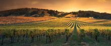 Golden Sunset Vines