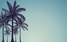 Silhouette Palm Tree In Flat Icon Design With Vintage Filter Background