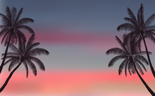 Silhouette Palm Tree And Sunse...