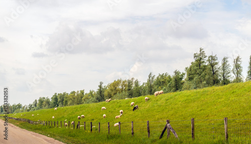 Photo Long dike with sheep in the Netherlands