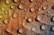 Regentropfen auf Herbstlaub