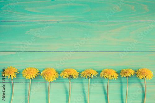 Obraz na plátně Dandelions on a blue wooden background